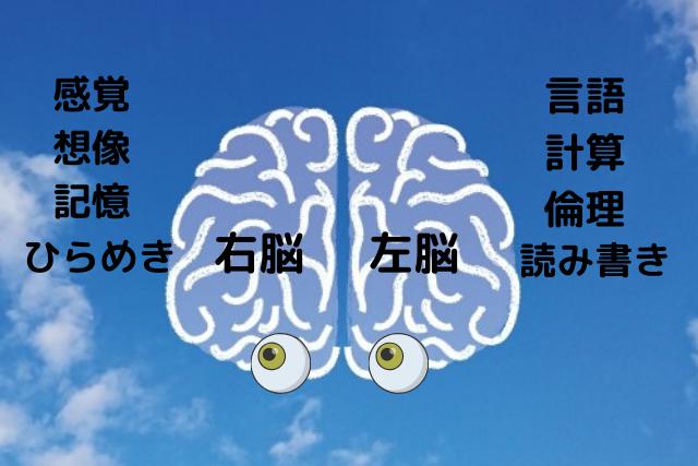 の 右脳 と 働き 左脳 脳における男女の違い 右脳・左脳の機能