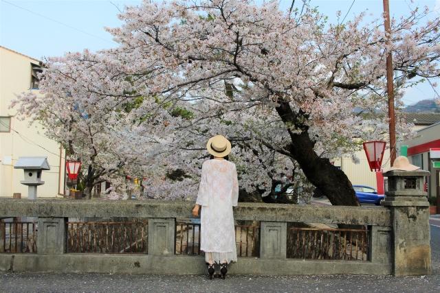 桜を眺める女性
